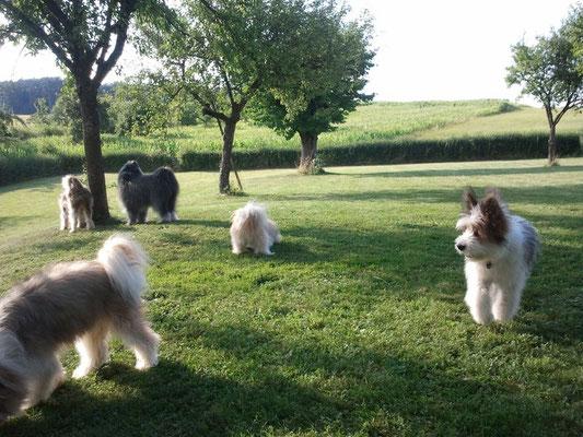 Ja, wir haben wirklich November - Familienhunderasse Elo im Paradies