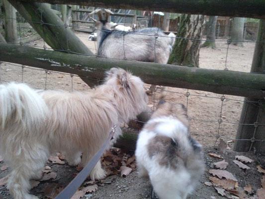 Lolli erklärt die unterschiedlichen Tiere.