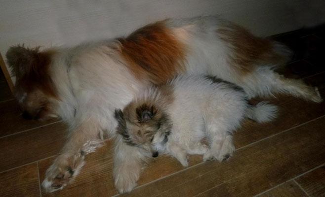 Elo - der Familienhund in groß und klein
