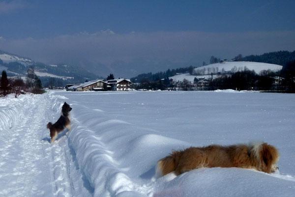 ...der in Kitzbühel wohnt - was für ein Winter!