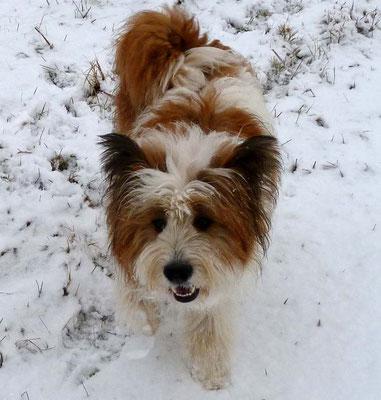 ...wenigstens hier sieht Pookie ihren ersten Schnee.