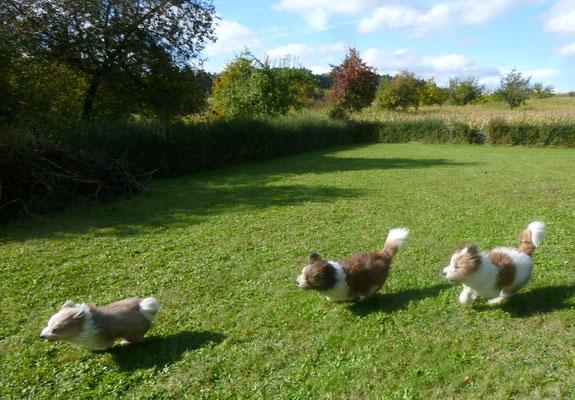 Hier in unserem neuen Garten können sie bald für immer toben :-).