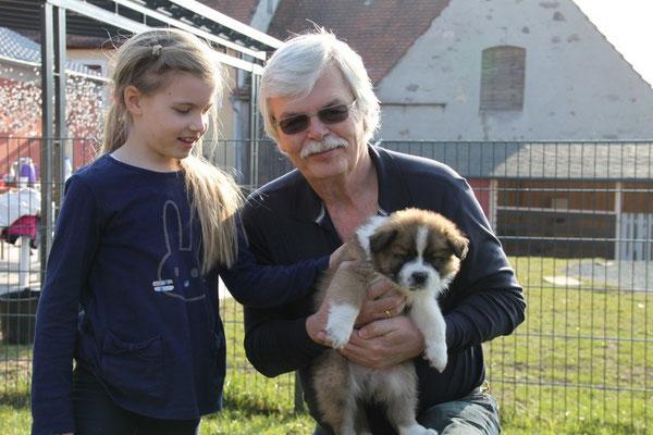 Hunderasse für Kinder und Senioren