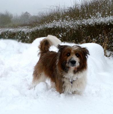 Candy im Schnee.