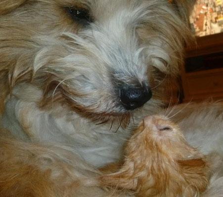 ...sie bemuttert die Katzenbabies...