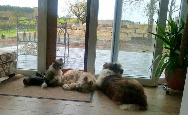 Familienhunde-Kuschelzeit