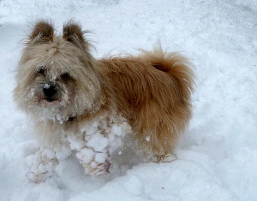 Lolli im Schnee.