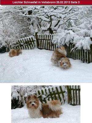 ...nicht nur die Hunde waren begeistert...