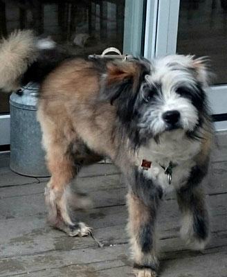 Familienhund Servicehund