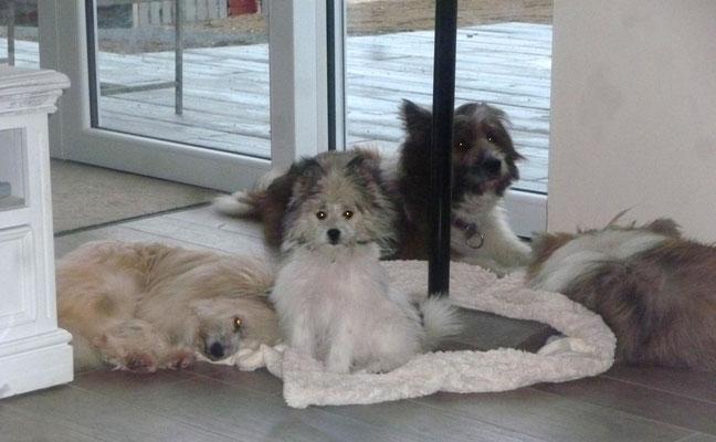 """Um unseren """"Weihnachtsbaum"""" - was machen die Hunde nur, wenn der wieder auf der Terrasse steht???"""