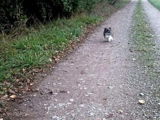seriöse Hundezucht