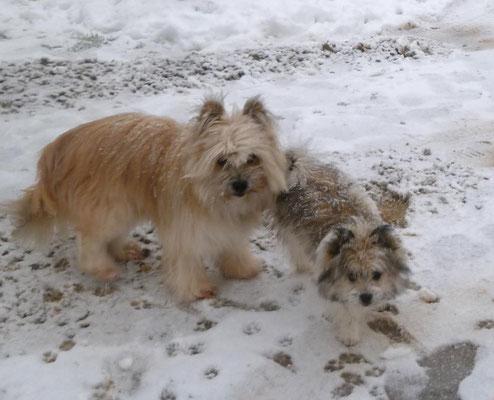 Lolli und Baby-Milou.