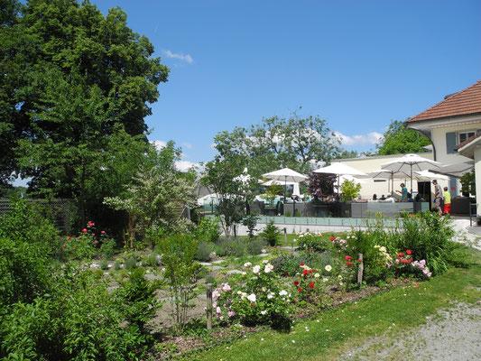 Seerose und Seeblick die Top Ausflugsrestaurants Region Solothurn