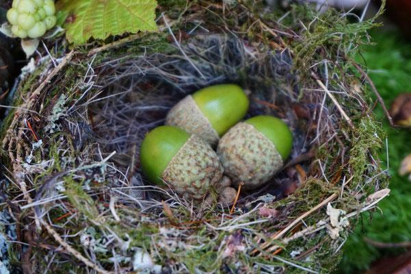 7.September....kleine Vögel sind ganz große Künstler!