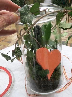 Die blaue Hyazinthe in ein Einmachglas gepflanzt