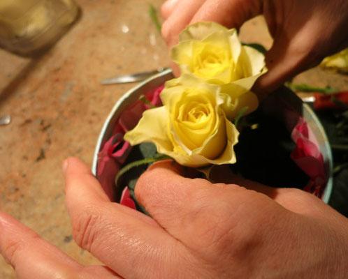 16. Die anderen Rosen drumherum stecken.