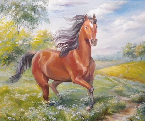 Кінь у полі