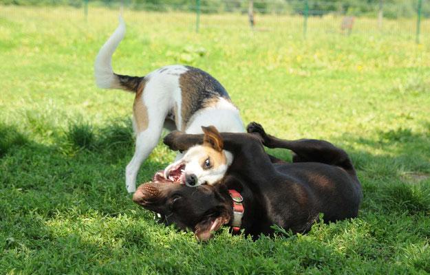 Lisa und Thora beim Spielen
