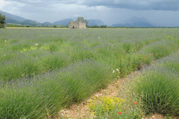 Plateau Valensole