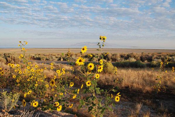 Antelope Island