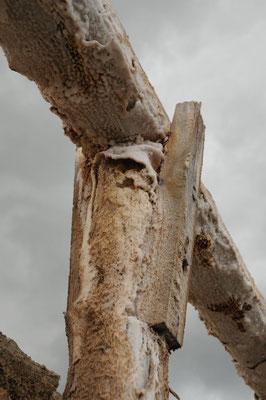 Die Salzkruste ist ein natürlicher Termitenschutz