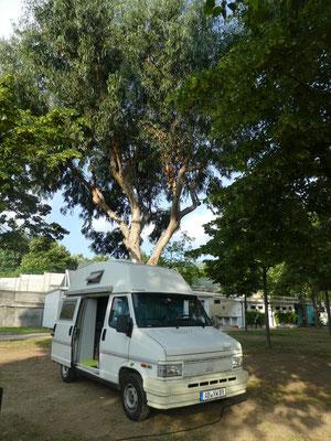 Mein Stellplatz und Eukalyptus Bäumen in Sportorno