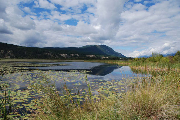 Radium Wetlands