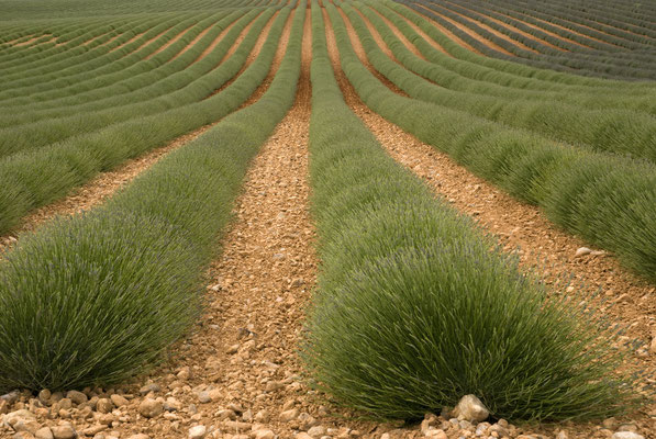 Lavendelroute