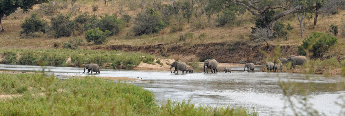Flussdurchquerung einer Elefantenherde