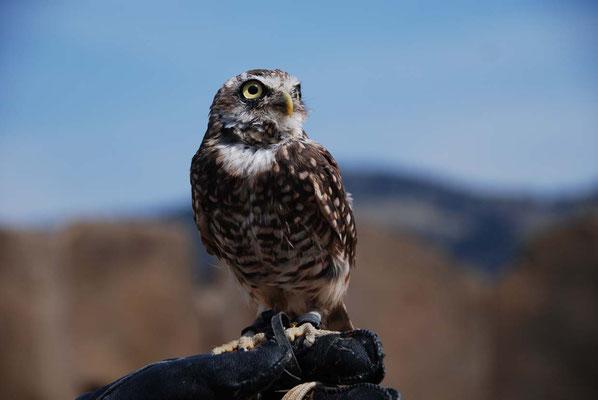 Kamloops Wildlife Park - Kauz