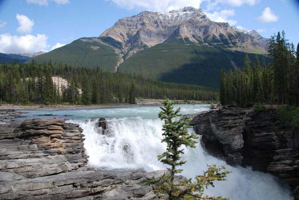 Athabasca Falls im Jasper Nationalpark