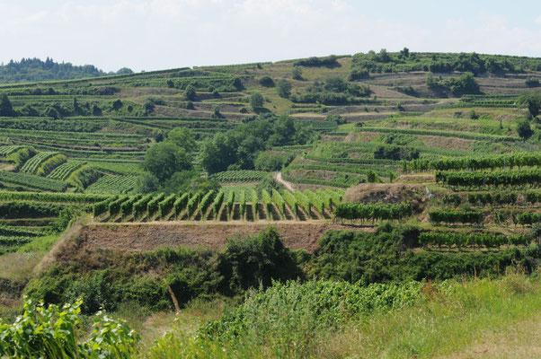Weinterrassen