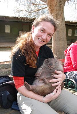 Australien - Snoopy der Wombat