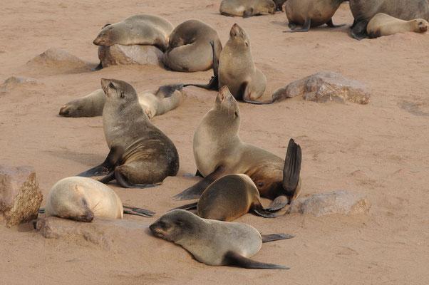 Cape Cross - auch Robben tanken gerne Sonne