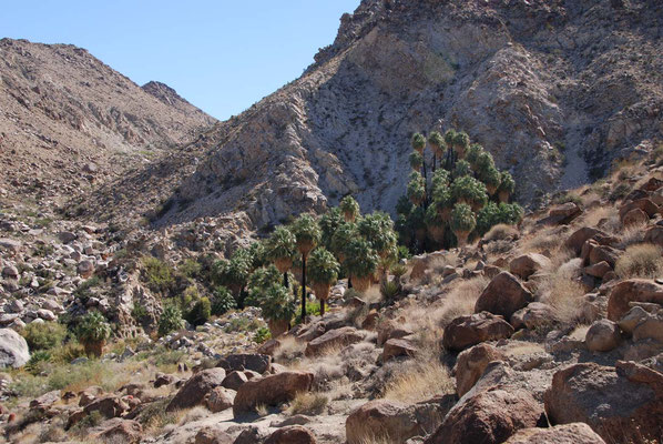 "Joshua Tree Nationalpark - Wanderung zur ""49 palms oasis"""
