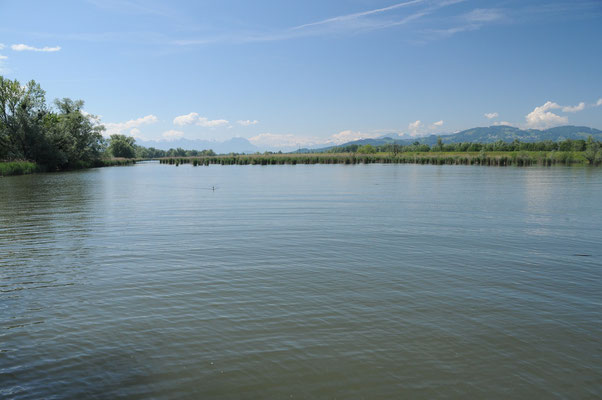 Rheindelta mit den Bergen im Hintergrund