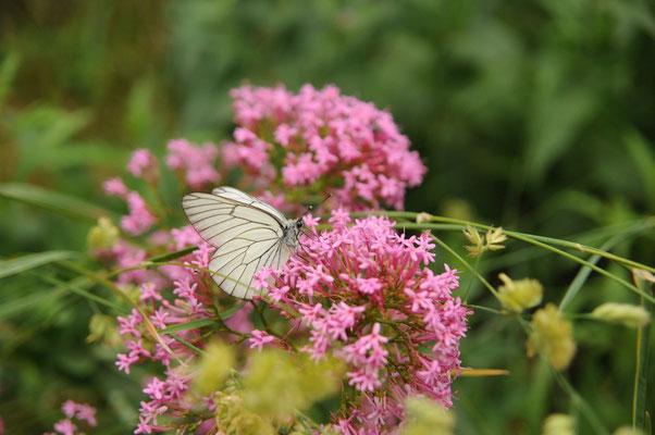 """Flora und Fauna in der Region """"provence alpes cote d'azur"""""""