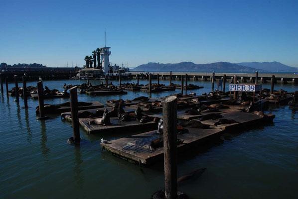 Feindliche Übernahme am Pier 39