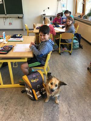 Schulhund Grundschule Zeltinger-Rachtig