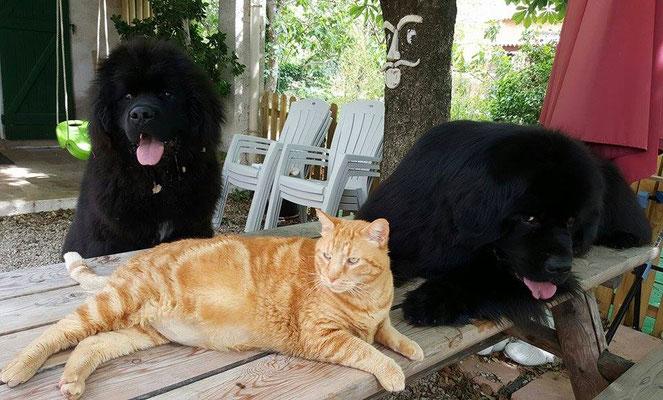 Père & fils sur la table avec Minou