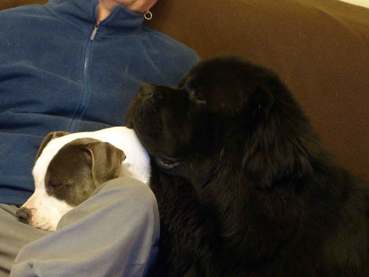 Gros câlin avec son papa et Iona