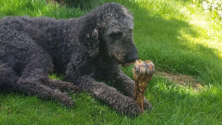 Auch für Milo gabs einen MEGA-Knochen
