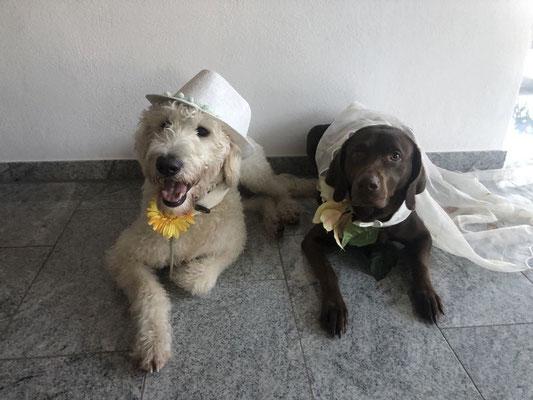 Justus mit seiner Labbi-Braut Luna ;-)    (die Hochzeit war nur Fake :-) )