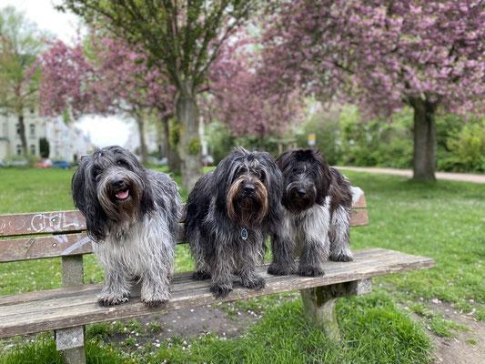 Feena, Aimee & Theo