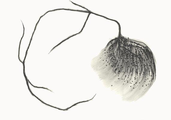 © cesa wendt | vage existenzen (5), 2012 | 70 x 100 cm | graphit, graphite | bild-nr. 2012_02_05