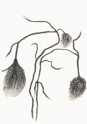 © cesa wendt | vage existenzen (8), 2012 | 100 x 70 cm | graphit, graphite | bild-nr. 2012_02_02