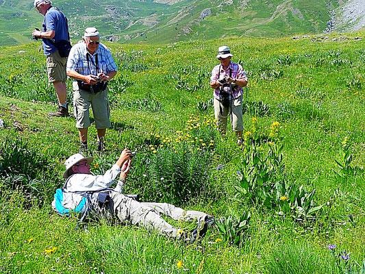 botanisieren in den Pyrenäen