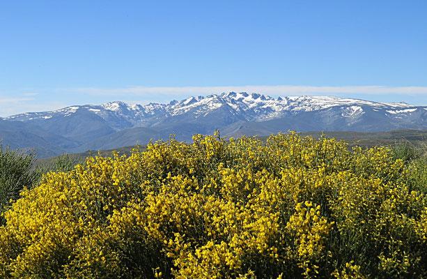 Blick auf Gredos