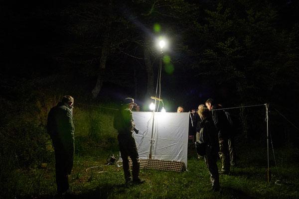 Nachtfang mit Lichtfalle