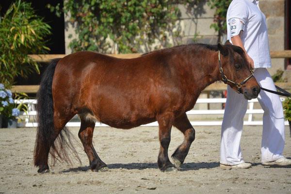 Majoly de la Clairière 21 ans Photo élevage du Vaillant